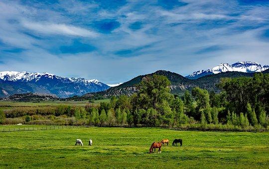 Colorado, Mountains, Horses, Grazing, Meadow, Field