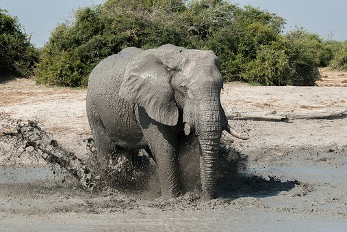 Elephant, Water Hole, High Spirits, Water Games