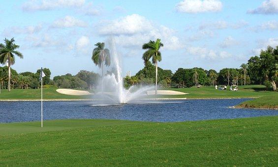 Miami, Florida, Palms, Palm Trees, Lake, Water