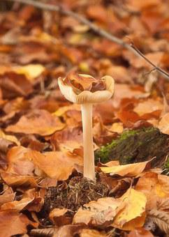 Mushrooms, Forest, Autumn, Leaves, Mushroom Picking