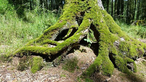 Tree Support, Tree, Moss, Forest, Log, Root, Weave