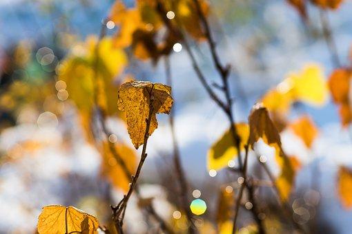 Leaf, Winter, Golden, Orange, Alone, Single, Lonely