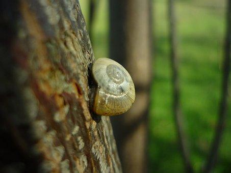Snail, Support, Trunk, Molluscum, Shell, Spiral
