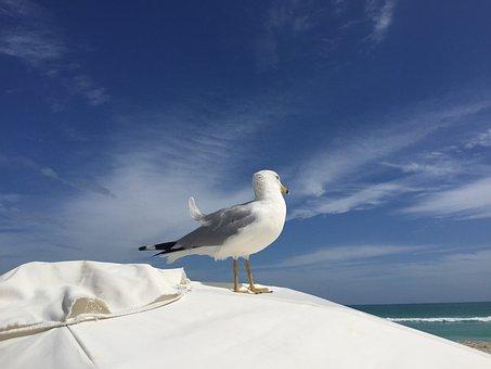 Seagull, South Beach, Miami, Sun, Umbrella