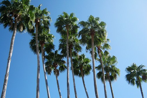 Palm Trees, Florida, Vacation, Summer, Blue Sky, Sky