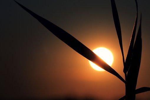 Sunset, Sun, Grass, Blade Of Grass, Wedel, Landscape