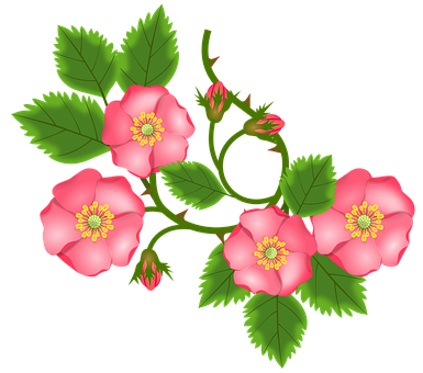 Rose Tendril, Bush Rose, Entwine, Branch, Bud, Leaves