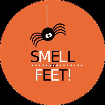 Spider, Halloween, Cute, Smell My Feet, October, Fun