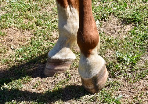 Hooves Of A Horse, Feet Of Horse, Horse At Rest