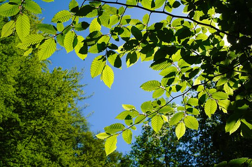 Leaves, Branch, Green, Foliage, Tree, Nature, Forest