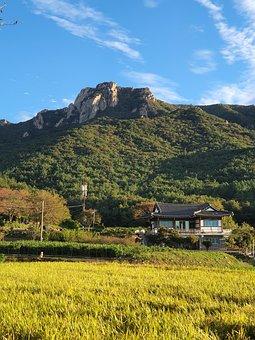 Korean Mountain, Wolchulsan, Autumn, Golden Rice Field