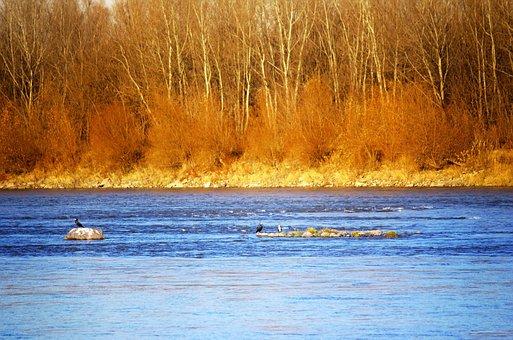 Landscape, Nature, River, Water, Vegetation, Autumn