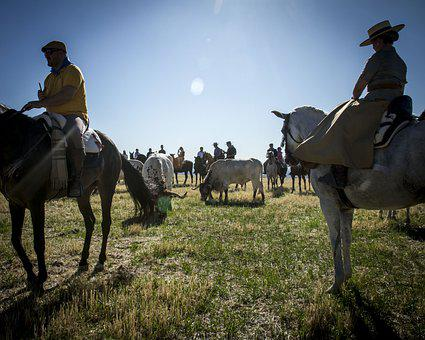 Oxen, Horses, Running Of The Bulls, Transhumance