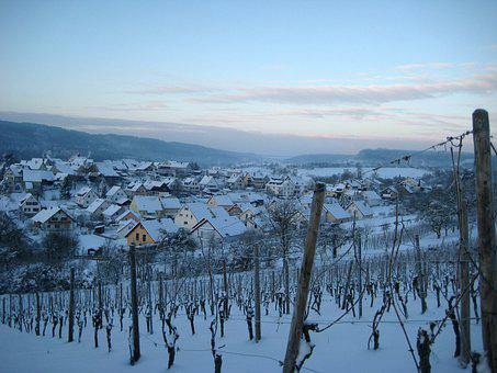 Vineyard, Winter, Landscape, Snow, Vine