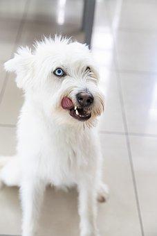 Dog Dogs, Köpek, Hayvan, Animal, Snow, Sweet, Pets