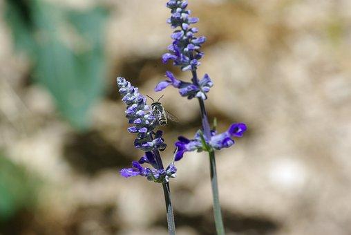 Lilac, Flowers, Purple, Leaves, Closeup, Bee, Bug