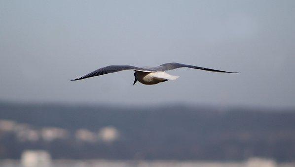 Nature, Animals, Birds, Freedom, Closeup, Quiet