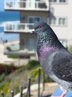 Carlsbad, Sandiego, Beach, Sandiegobeach, Pigeon