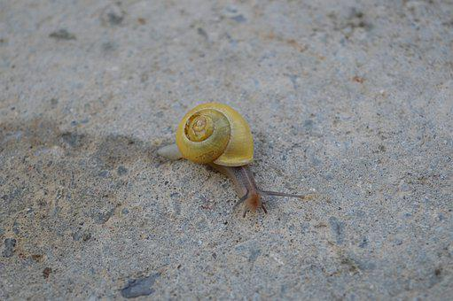 Worm, Nature, Slowly, Conch