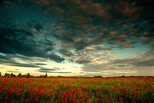 Poppy, A Cloud In The Sky, Nature, Poppy Flower