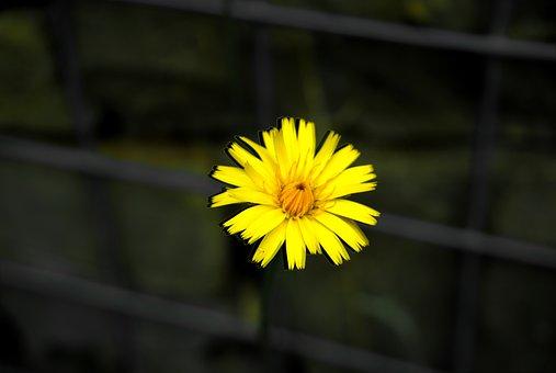 Flower, Hdr, Plant, Garden, Forest, Spring, Landscape