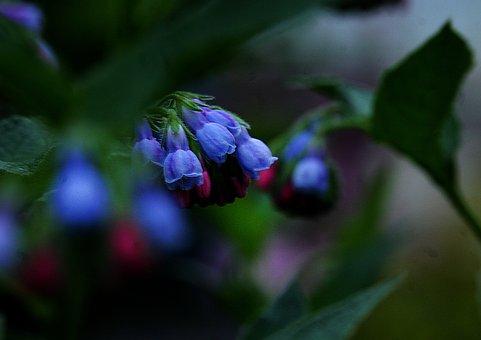 Comfrey, Flower, Inflorescence, Bell, Flora, Flowers