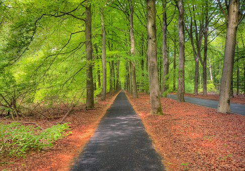 Forest, Green, Hdr, Path, Spring, Trees, Leafs