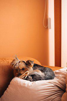 Dog, Pets, Animal, Orange Pets