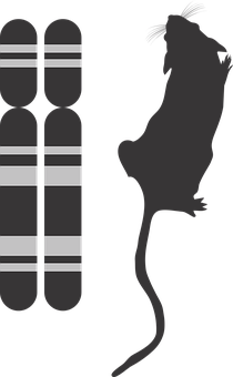 Genotype And Phenotype Icon, G2p