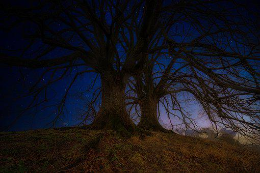 Trees, Night, Starry Sky, Hill, Nature, Forest, Shadow