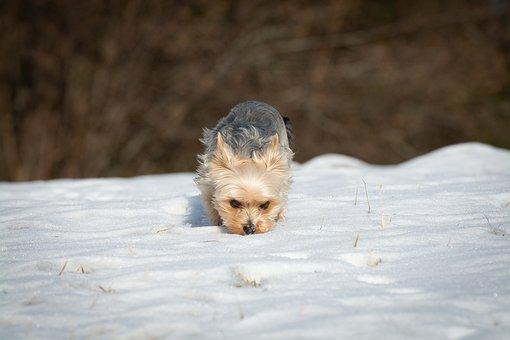 Dog, Winter, Snow, Spout, Freewheel, Sniffing, Explore