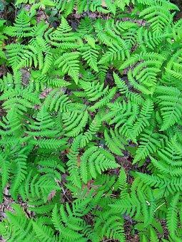 Grass, Forest, Beauty, Nature, Macro