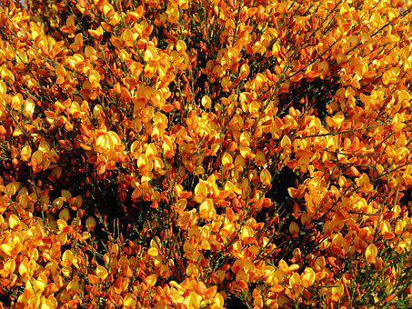 Flowers, Red, Yellow, Blossom, Nature, Shrub, Plant