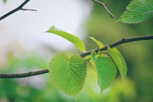 Leaf, Branch, Green, Color, Tree, Forest
