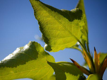 Leaves, Young, Fresh, Sunny, Transparent