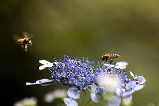 Flowers, Bee, Honey, Insects, Flower
