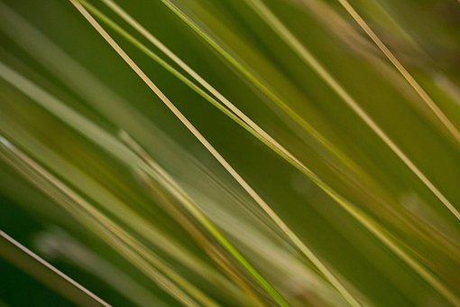 Grass, Stems, Plant, Nature, Summer, Green, Meadow