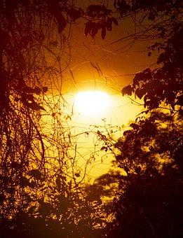 Sunset, Sun, Landscape, Sky, Forest, Sunrise, Nature