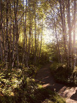 Forest, Path, Trees, Nature, Landscape, Away, Trail