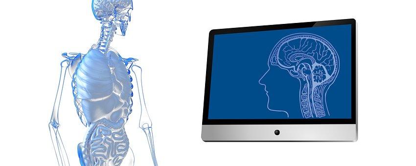 Person, Guts, Organs, Monitor, Skull, Brain, Scan