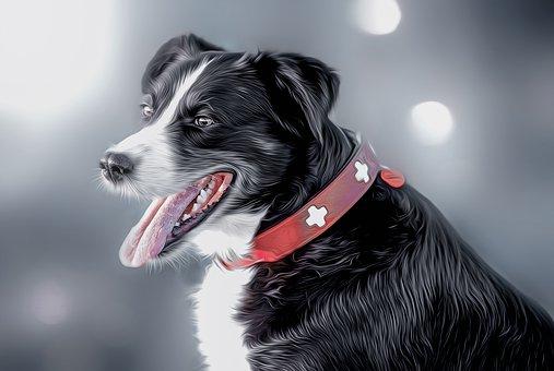Dog, Hybrid, Animal, Pet, Mixed Breed Dog, Fur