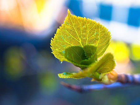 Leaves, Shoots, Young, Green, Fresh, Spring, Nature