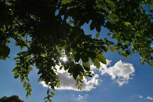 Tree Leaves, Branch, Sun Apparent, Bright Sunshine