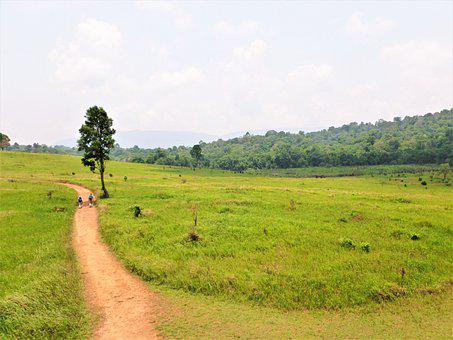Khao Yai, National Park, Thailan, Thailand, Meadow