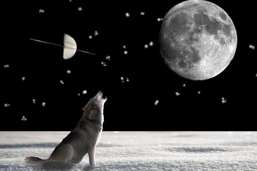 Wolf, Animal, Wild, Dog, Hunter, Predator, Animal World