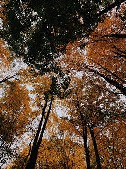 Trees, Autumn, Fall, Nature, Tree, Landscape, Mood