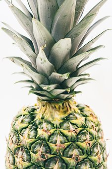 Pineapple, Green, Pine, Tree, Nature, Fruit, Forest