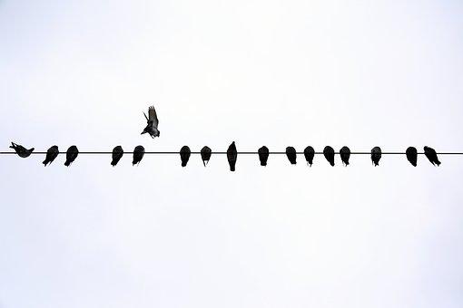 Dove, Sky, Flight, Birds, Flying, Animal, Animals