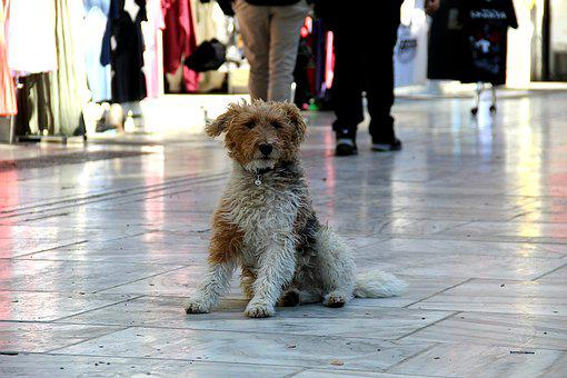 Street Dog, Dog, Street, Animal, Pet
