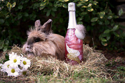Easter Pictures, Easter, Easter Bunny, Hare